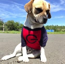 Doggy-Raglan
